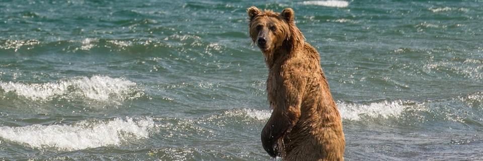 Bear-A_960x320